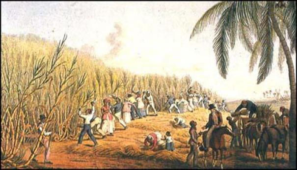 Image result for barbados sugar plantations