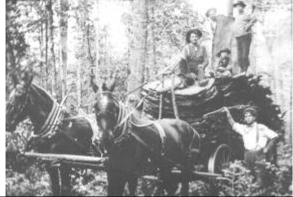 haulingbark