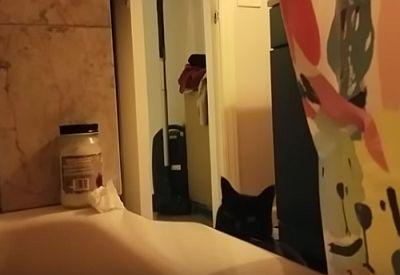 Katze hasst es wenn man singt
