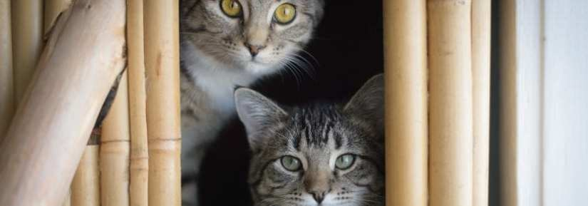 Two tabby cats in cat structure