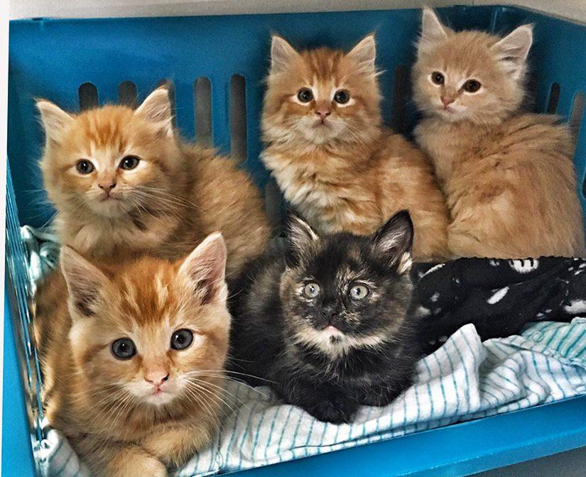 What Is Kitten Season Bc Spca