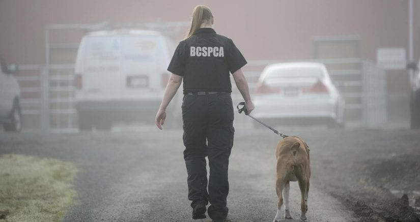 Cruelty investigative Department staff in uniform walking dog outdoors on misty day