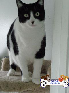 cat3_small