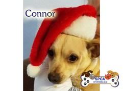 connor_spca2