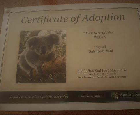 VIIa i adopcja misiów koala