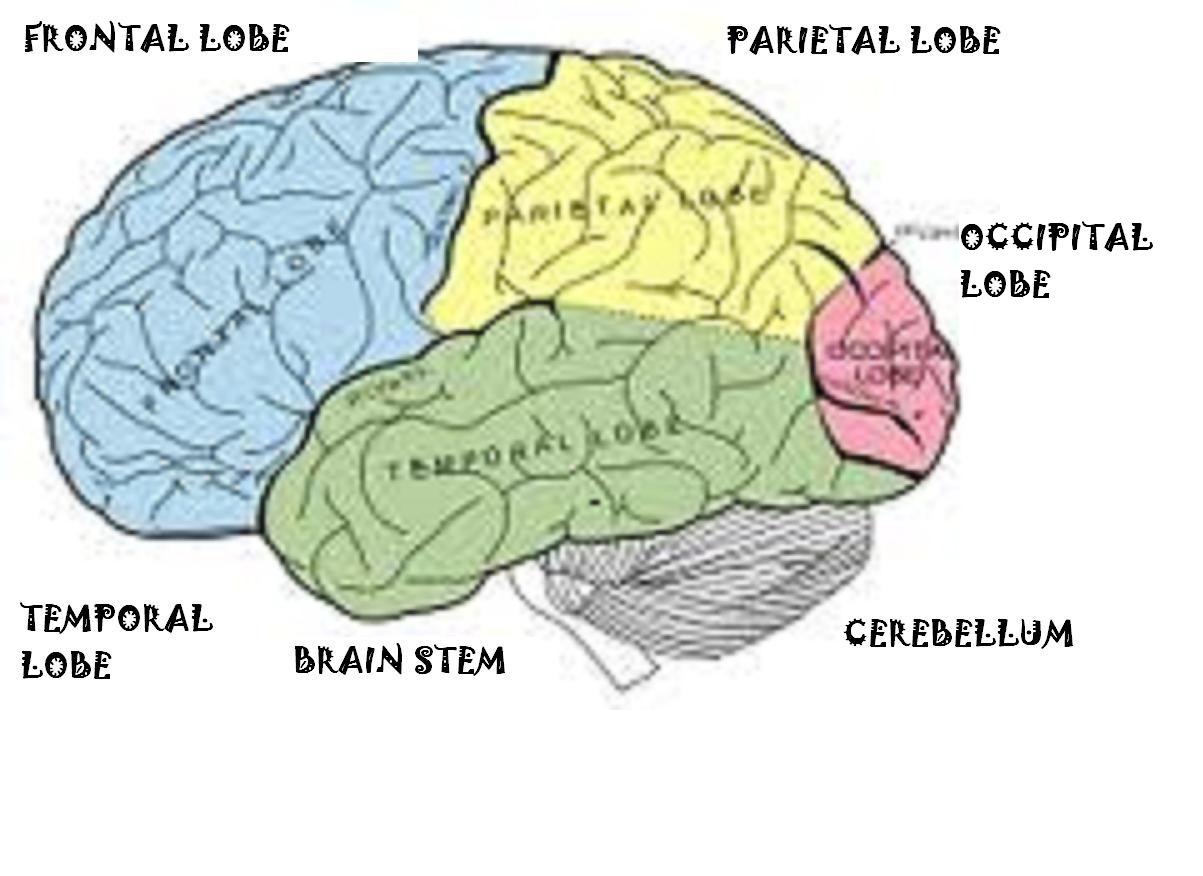 The Brain A Powerful Tool Use It