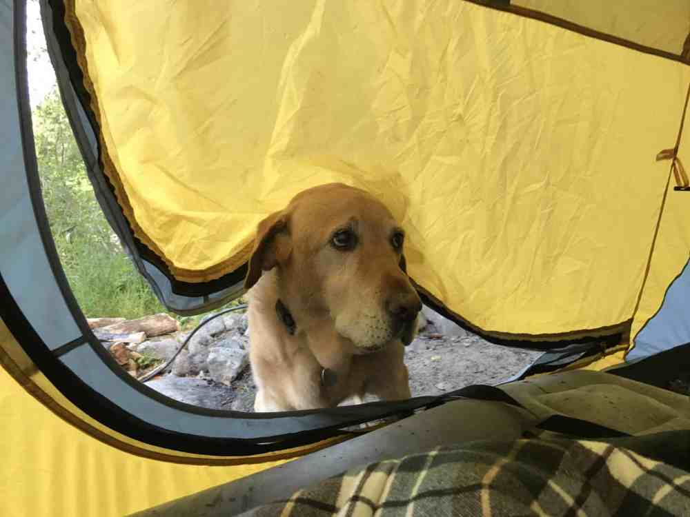 Sad dog not allowed in tent