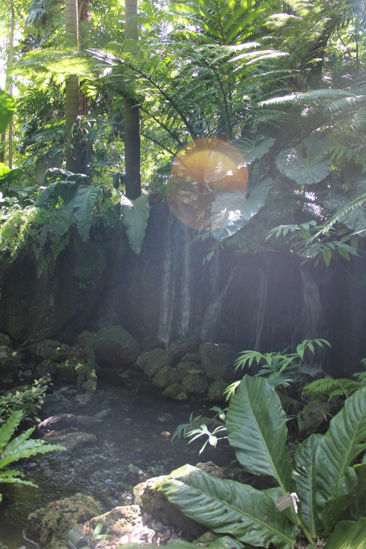 Deeper into the garden, the more it looked like a jungle. The sun peeked out between the leaves of the trees.