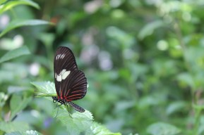 A butterfly kept still, perched on a leaf.