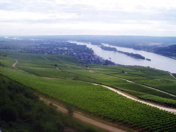 Vy över vingårdarna ner mot Rudesheim.