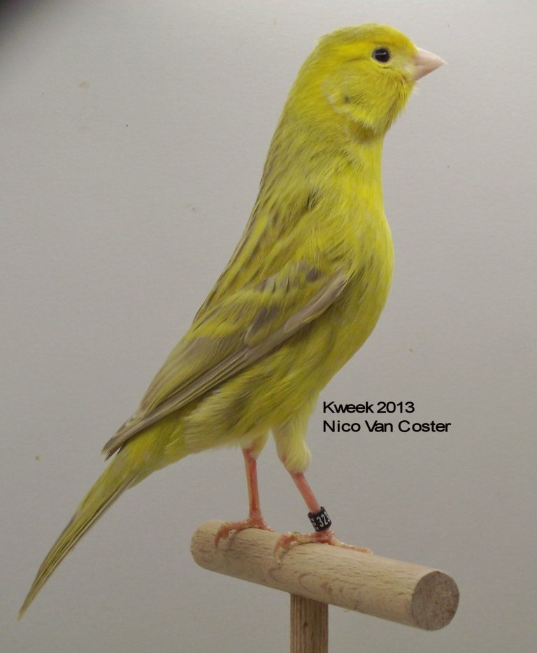 agaatpastel-geel-schimmel