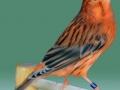 agaat-roodivoor-intensief-2