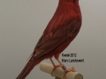 agaatkobalt-rood-intensief