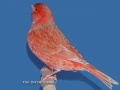 isabel-rood-schimmel