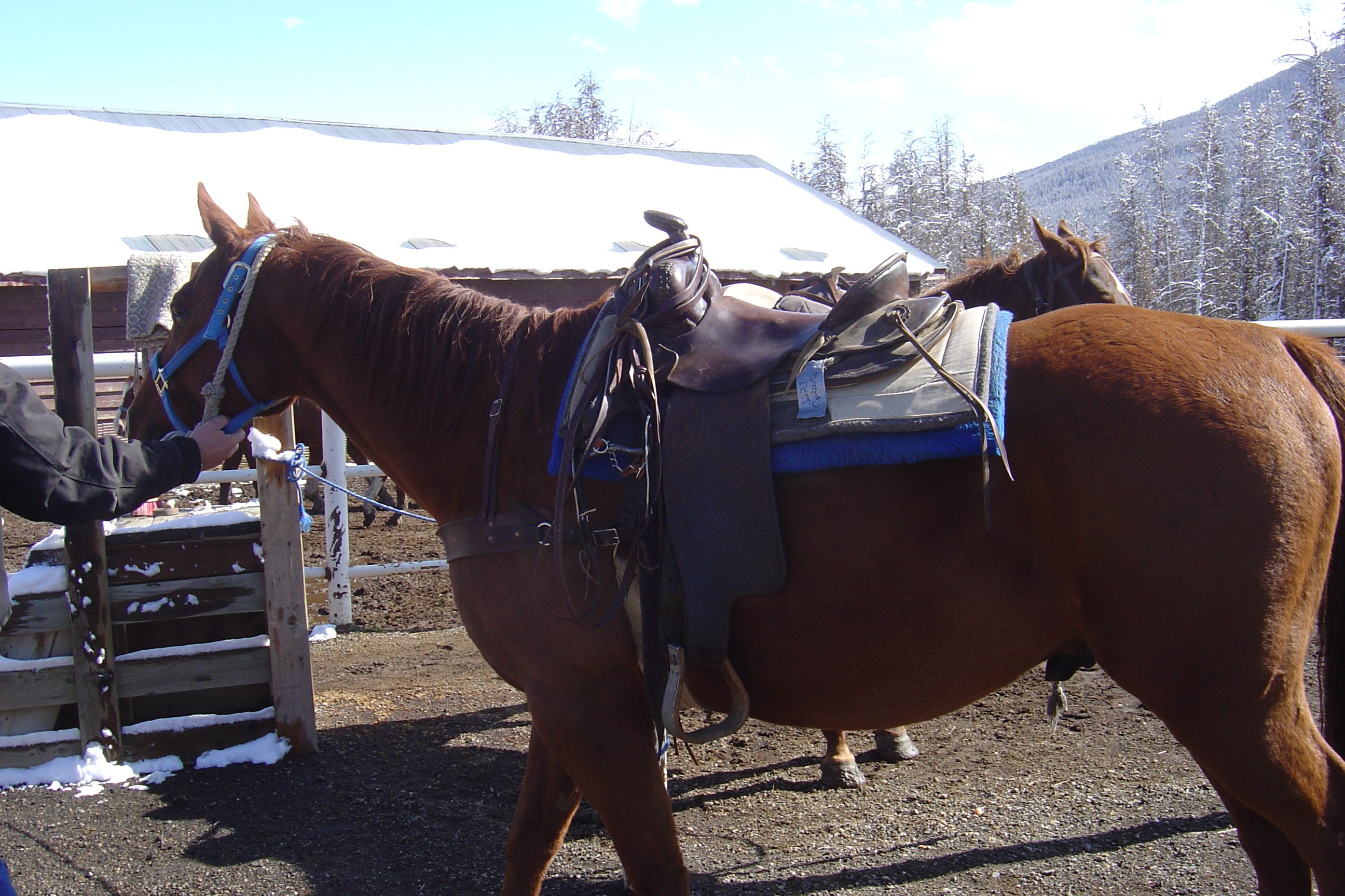 My lovely horse was named Cupcake and she always wanted to go faster than the horse in front of her.