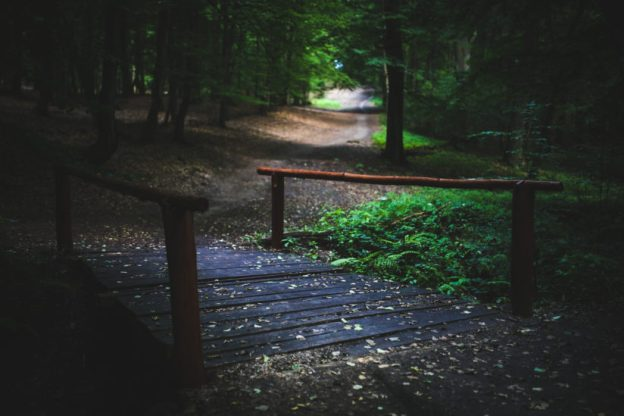 wood-nature-forest-bridge