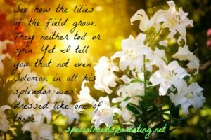 lilies of the field1