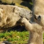 Momma Bear Lets Go