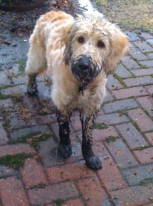Muddy Paws & Love: What matters in special needs parenting