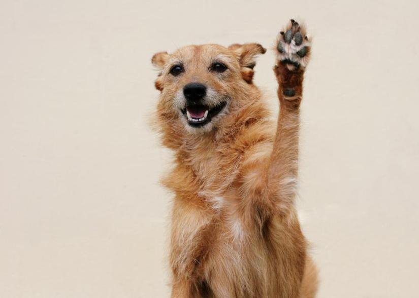 Happy dog ​​doing high five