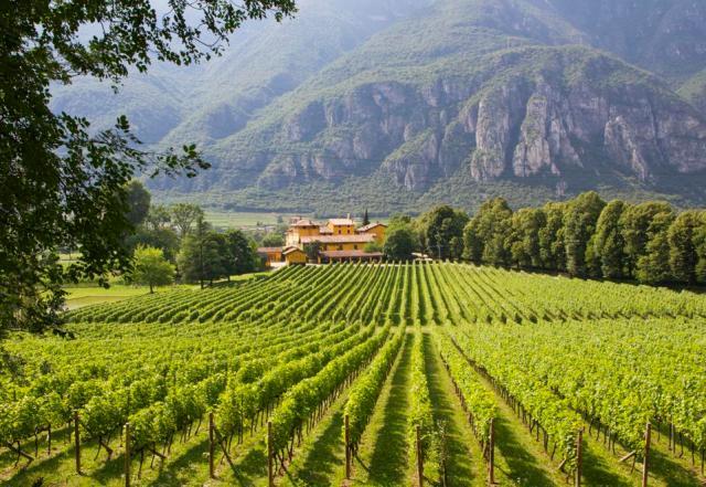 Winery in Trento, Italy