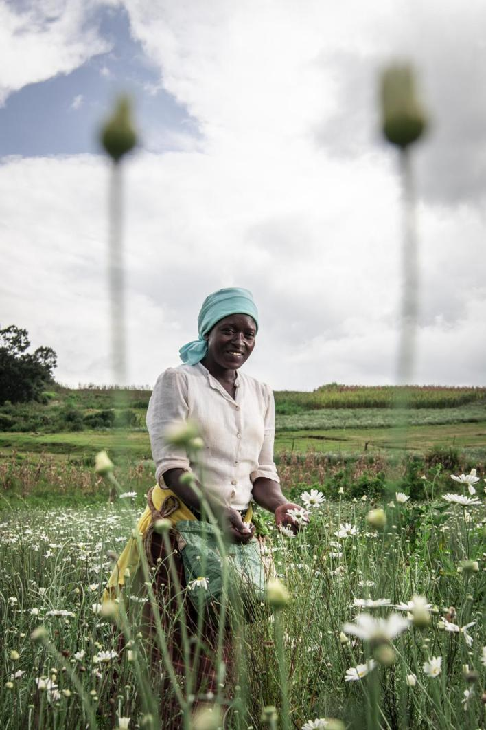 Sony World Photography Awards: a grower in fields of a daisy known as ″the flower of death″