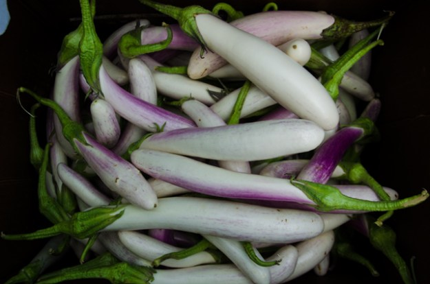 White Bride Eggplant