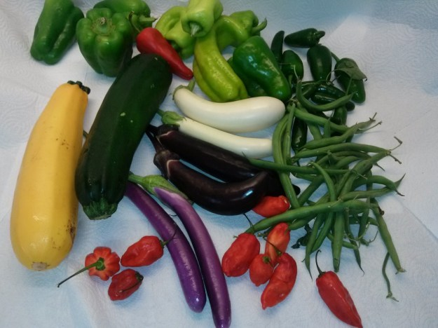 Fresh Harvest Photo