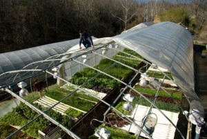 Planet Earth Diversified greenhouse Production