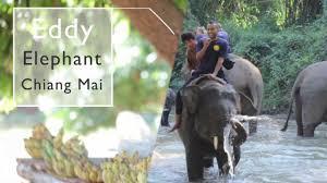 elephant-eddy-2