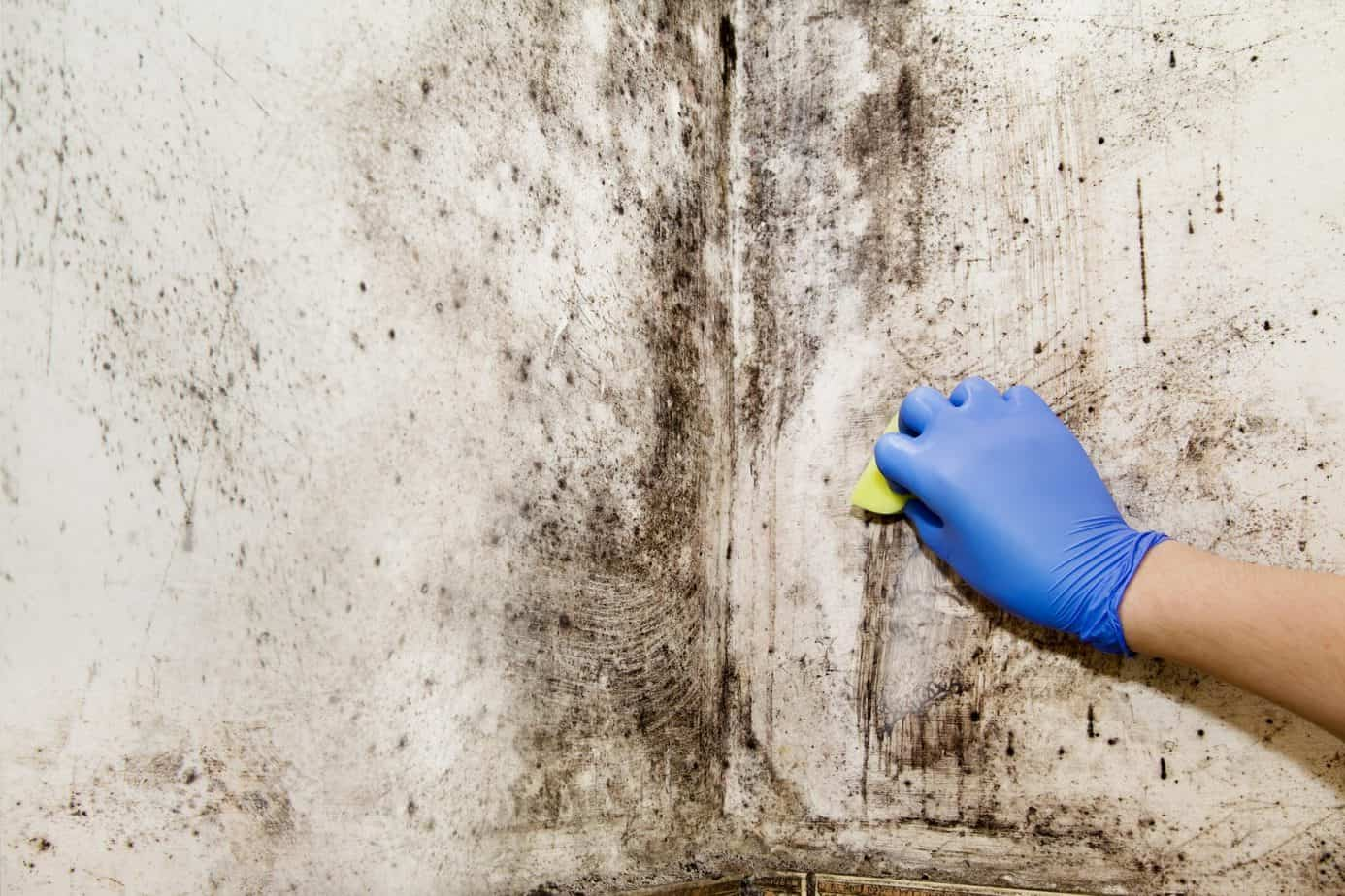 Hand cleans mold in house