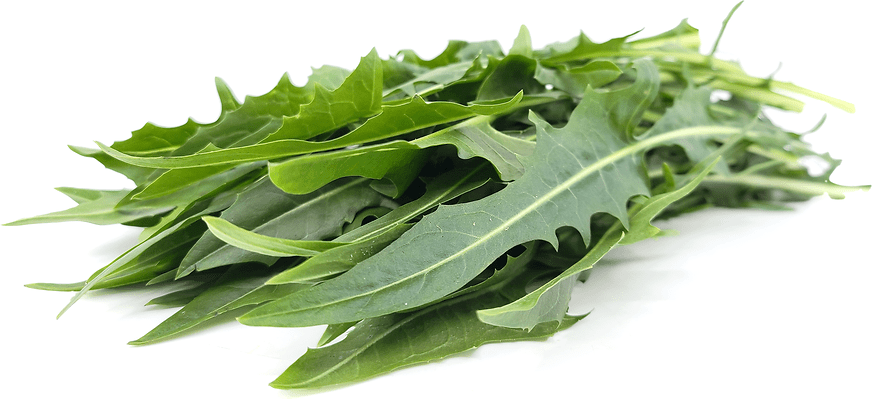 Include Dandelion Greens as Daily Eating Habbits