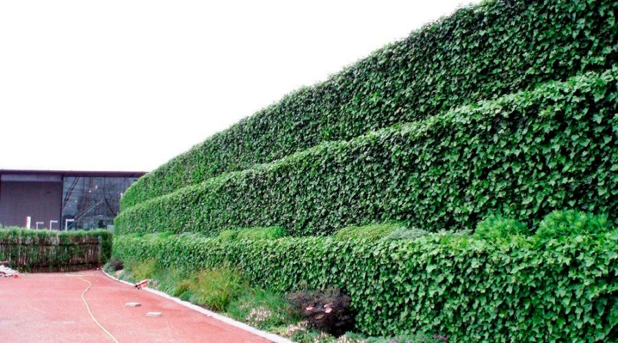 LIVING WALLS – RELIABLE AND SUSTAINABLE
