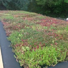 Do Green Roofs Improve Air Quality?