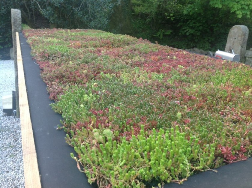 Green roofs are good at retaining rainwater
