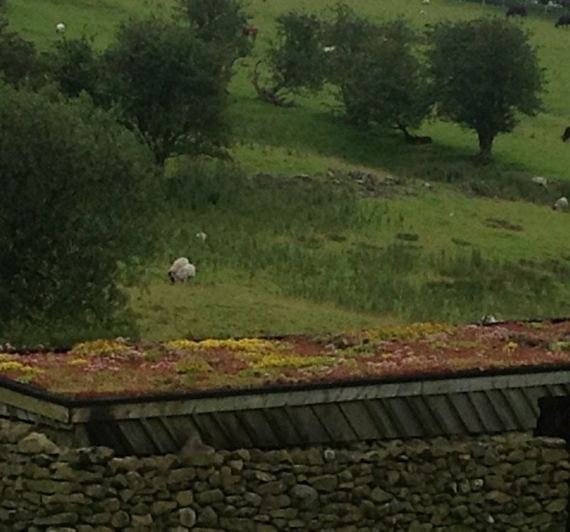 "New Planning Guidelines Make Green Roofs A""No-Brainer"""