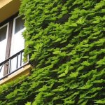 It's time to embrace the 'living wall' years