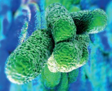 Legionaires Disease
