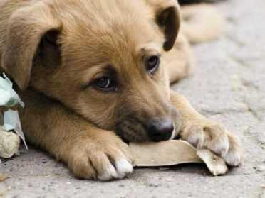 На Рівненщині просять створити притулки для собак – петиція