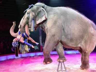 Цирки в Україні мають рік, щоб відмовитися від тварин у шоу-програмах