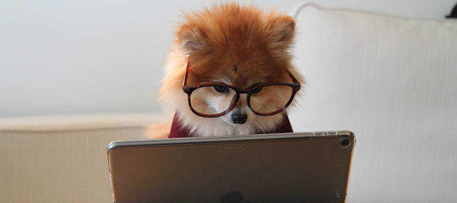 A dog looking at a computer screen.