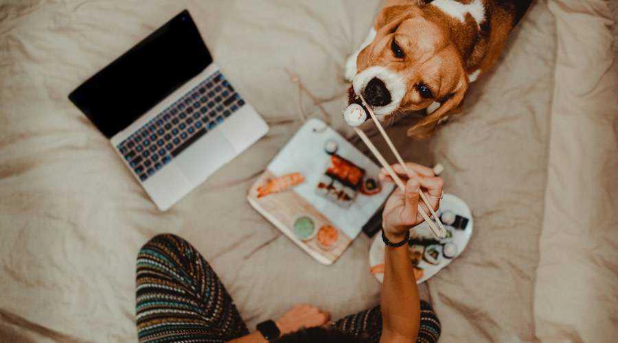 woman dog designer laptop sushi eat