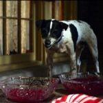 vampire-dog-trailer-01_med