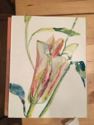 """Lillies, Silverpoint and Watercolor, 5"""" x 7"""""""