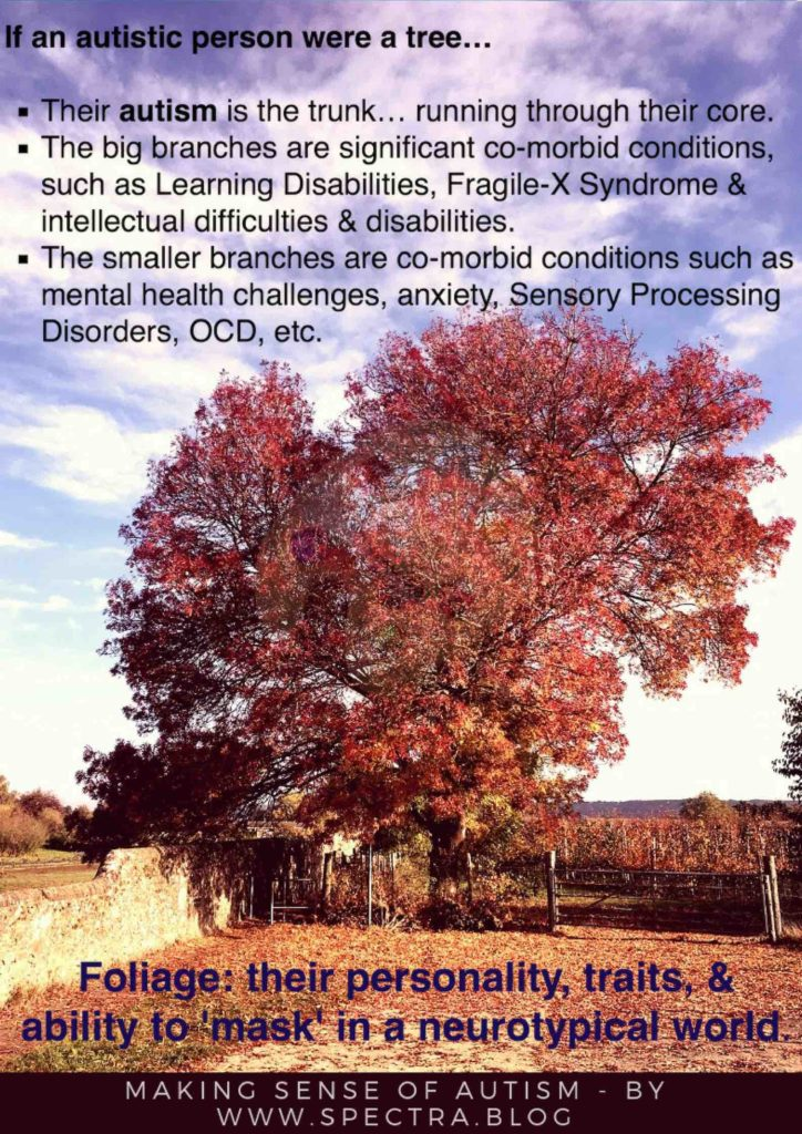 A picture showing a tree to explain autism, asc, asd, Asperger's.