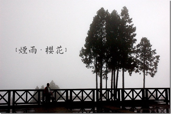 【嘉義】煙雨.櫻花