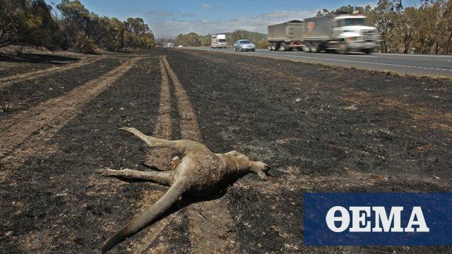Ανυπολόγιστη η καταστροφή στην πανίδα της Αυστραλίας από τις φωτιές