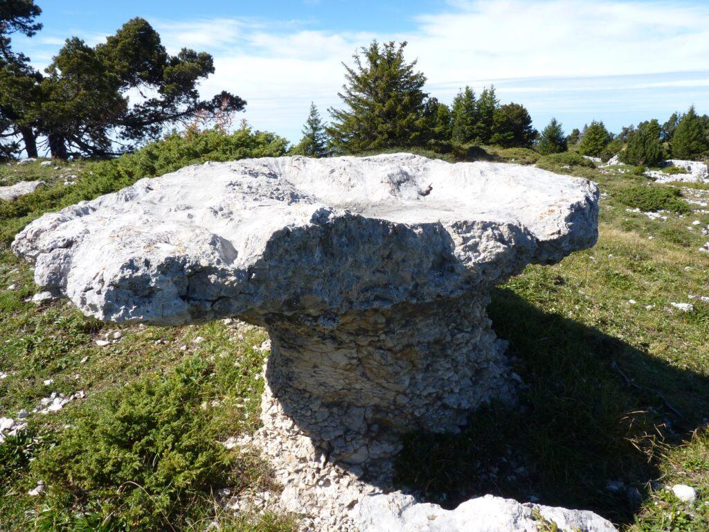 L'attribut alt de cette image est vide, son nom de fichier est Champignons-calcaire-sur-les-cr¬tes-entre-Fouda-Blanc-et-le-Pinet-ou-Truc-1-1024x768.jpg.