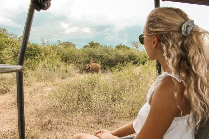 Dreaming of elsewhere Udawalawe safari