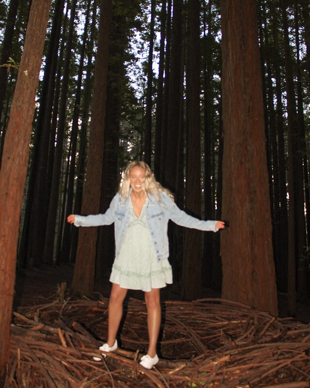 spellbound travels redwood forest